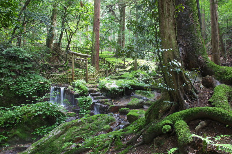 瓜割の滝2 Green Color Fukui Prefecture Capture The Moment From My Point Of View Fall Beauty Small Falls Forest Japan Photography