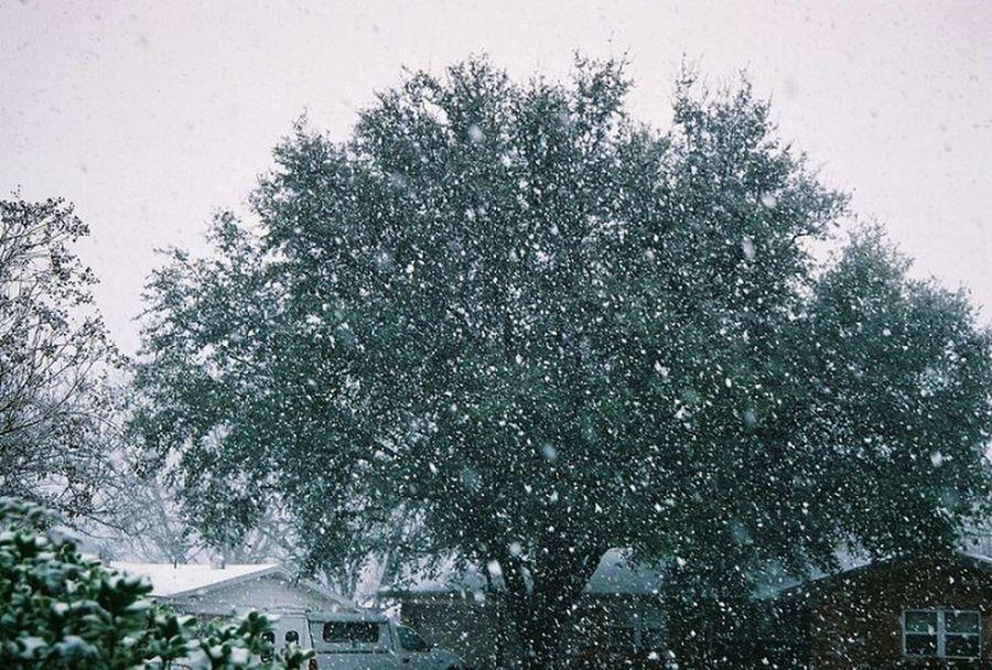 Snow Snowfall North Texas Texas Snow