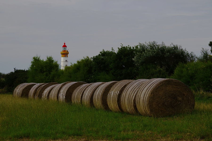 Saint Matthieu site Brittany Grass Lighthouse Trees Field Hay Bale No People Straw