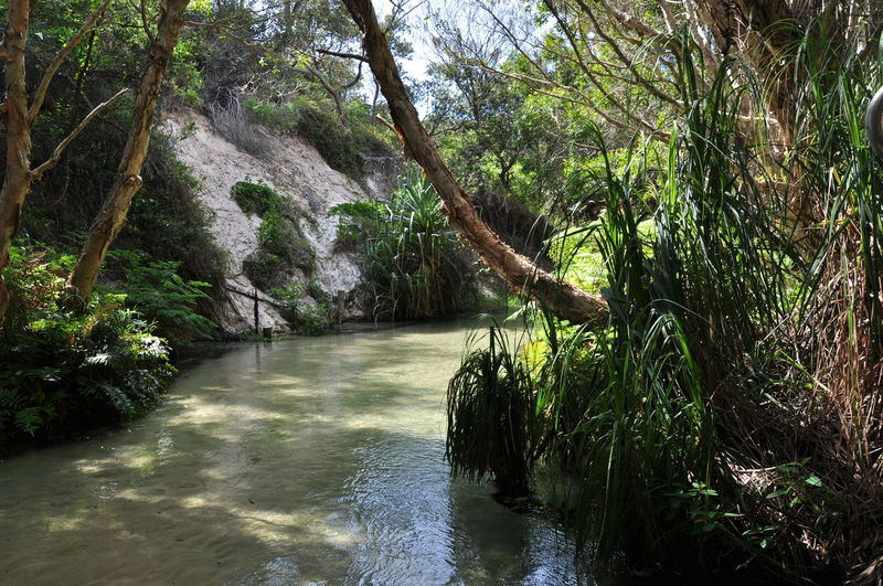 Australia Green Nature River View Wildlife & Nature Elicreek Forest Fraserisland Indian Head Lakebirrabeen Reserve River Water