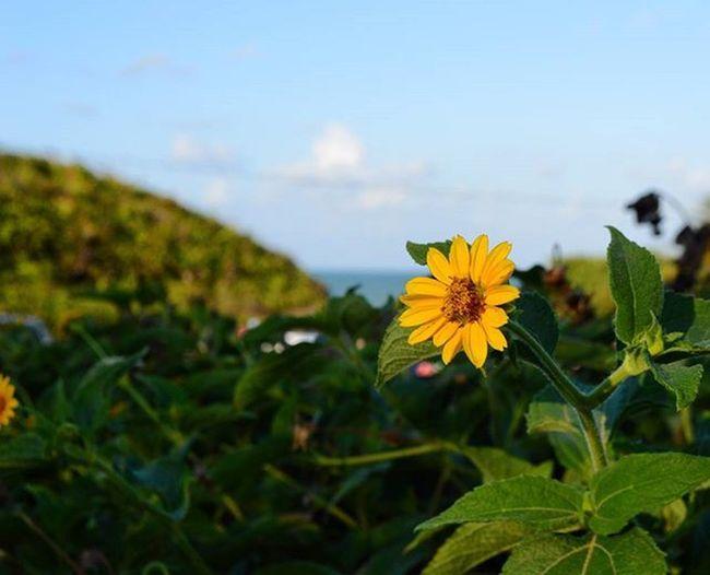 Photo Fotografia Foto Photographer Photograph Nophotoshop Nofilter Flower Flor Instaflower Beautiful Bonita Beach Praia Sol Sun Natureza Nature Tambaba Brasildosmeusolhos_ Ig_paraiba_