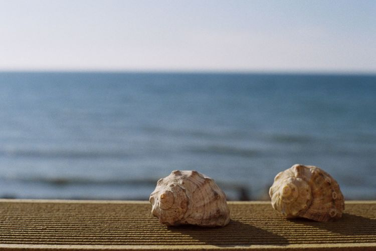 Close-Up Of Conch Shells On Railing Against Sky