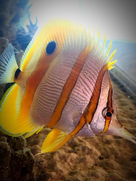 Fish Aquarium Aquarium Life Check This Out Marine Life
