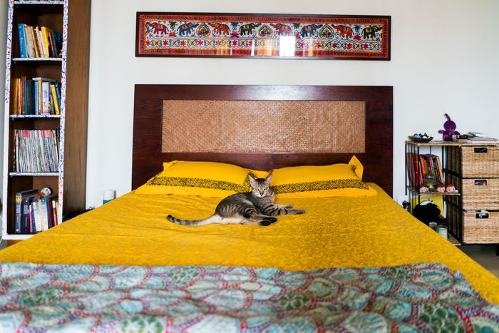 Bed Now Home Cat Feline Pets Relax Relaxation Yellow