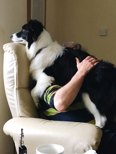 A 7 month old Border Collie puppy watching the world go by through the windows. Arms Raised Human Body Part Armchair Sitting Standing SUPPORT Peaceful Moment Collar Blackandwhite Cup Vape Armchair EyeEm Selects Domestic Animals Domestic Pets Mammal Canine Dog One Animal Vertebrate Relaxation Indoors  One Person Pet Owner Real People Border Collie Small Home Interior Furniture