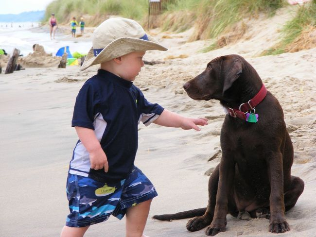 Baby Beach Childhood Dog Live For The Story New Friends Outdoors Pets Real People Vacations