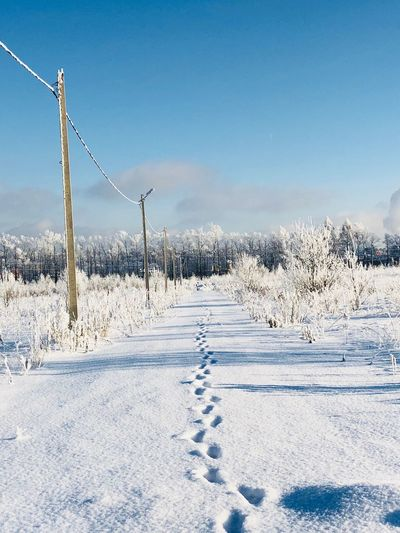 Snow Winter Cold Temperature Nature Weather White Color Tranquil Scene Landscape Field Frozen No People Tire Track Tree Scenics Outdoors Tranquility Beauty In Nature Day Bare Tree Sky