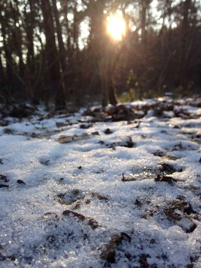 Schnee im wald Schnee Schnee Im Winter Schnee Im Wald