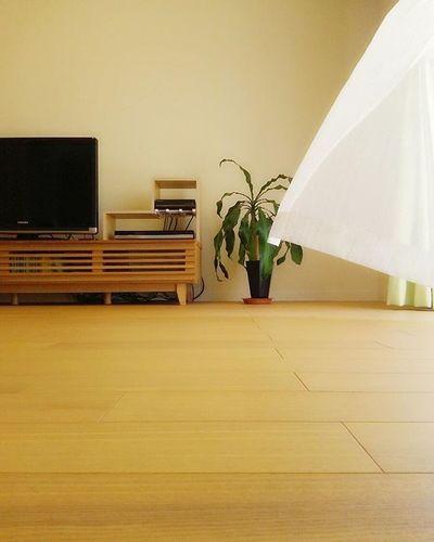 Wind 風が吹いている 風が心地よい 風が気持ちいい 風が強い 風が冷たい カーテン リビング Curtain Livingroom