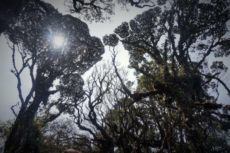 Malaysia Jungle Trees Sunlight Sunrays Nature Forest Nofilter