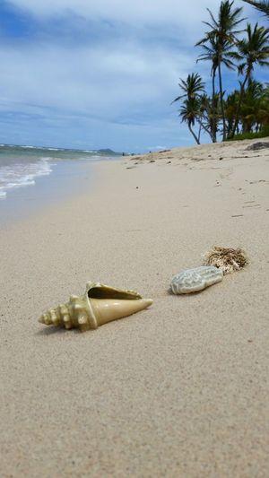 Ocean Beach Shells Sand Islands Caribbean Virgin Islands Paradise RePicture Travel VirginIslands
