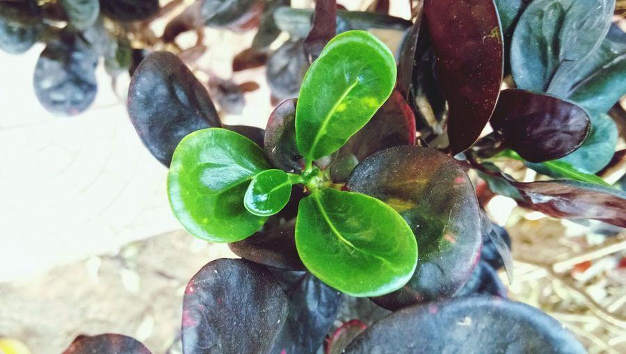 Leaf Tree