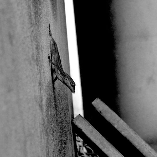 -/::( L Φ S T )::\- Blackandwhite Lizard Streetphoto_bw Nature_collection Darkness And Light Nature Streetphotography