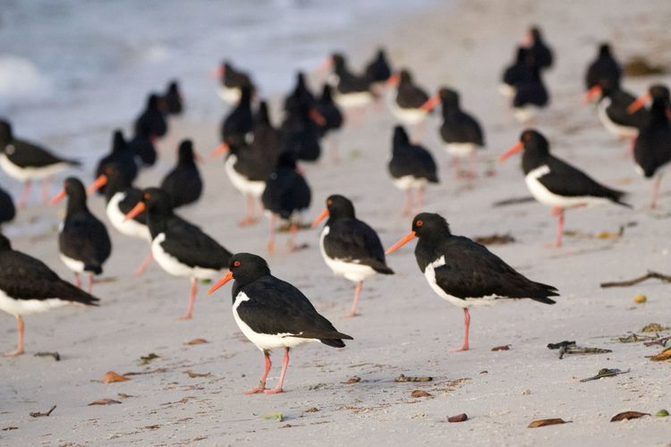 Flock of birds on beach