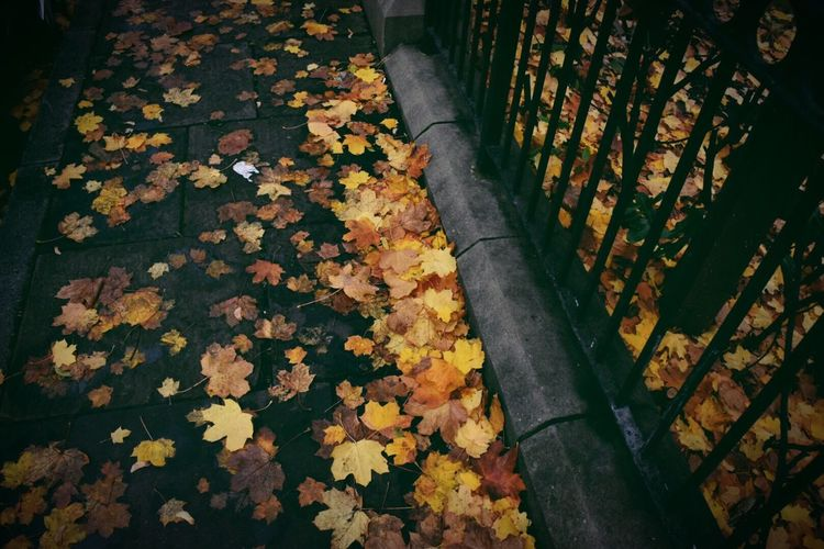 Autumn Leaves On Footpath By Railing