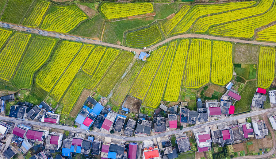 High angle view of multi colored candies on farm