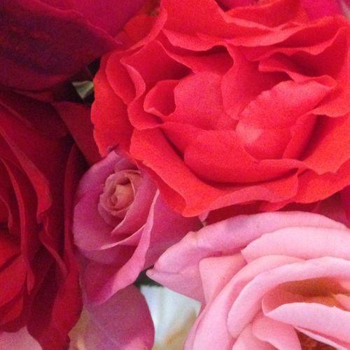 Vintage Roses Nature Landscape Flowers..