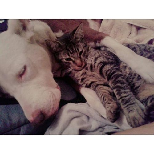 The Best Of My Life 💕🌻😍 Animal Photography Animal Love ♥ Guadalajarafotos