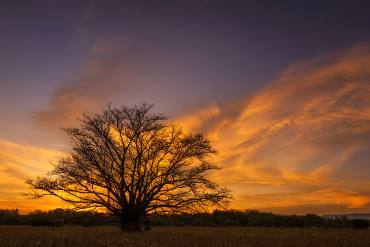 tree in field sunset backgroundform Thailand Sky Scenics - Nature Beauty In Nature Tranquil Scene Landscape Tranquility Plant Tree Sunset Cloud - Sky Environment Field Bare Tree Orange Color Land Non-urban Scene No People Nature Silhouette Remote Outdoors Isolated