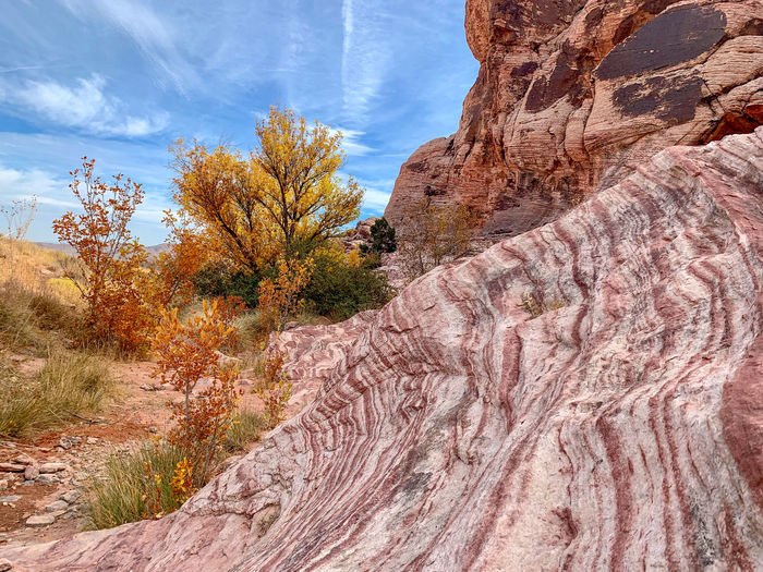Rock formations and autumn cottonwood trees. red rock canyon, nevada
