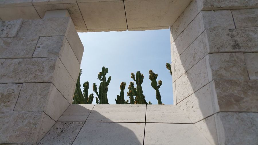 Abstract cactus seen through wall opening against sky