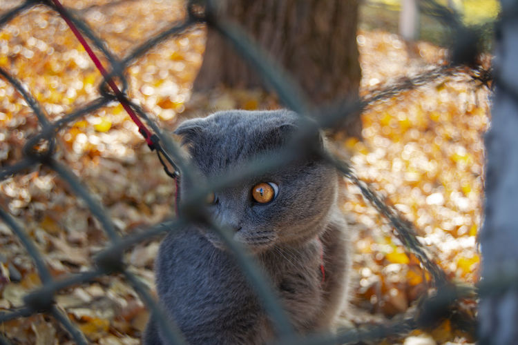 One Animal Animal Wildlife Mammal Day Animals In The Wild Nature No People Vertebrate Tree Close-up Portrait Selective Focus Focus On Foreground Outdoors View Cute Kitten Nature Scotishfold Looking Autumn Nature Autumn colors Whisker EyeEm Best Shots Beauty In Nature Belarus Autumn