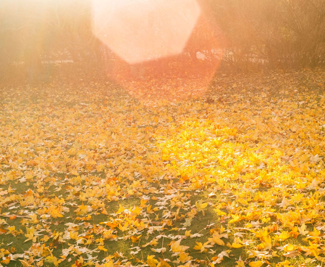 Yellow autumn leaves on land