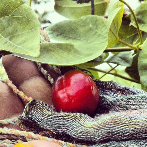 Strangeberry