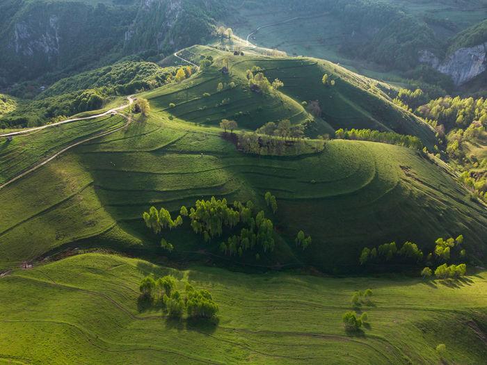Summer green landscape in the transylvanian hills, apuseni mountains