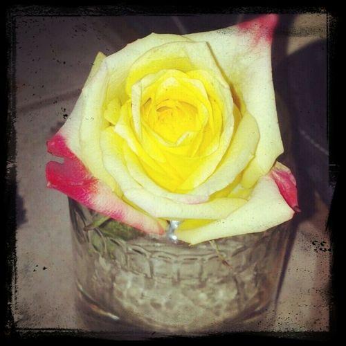 Beautiful#nature#rose