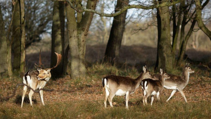 Family Matters Deer Dunes Of Holland Animal Animal Wildlife Animal Themes Animals In The Wild Mammal Deer Group Of Animals Antler Outdoors