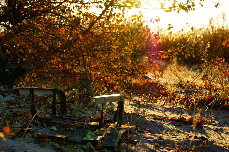 Bench by trees during autumn