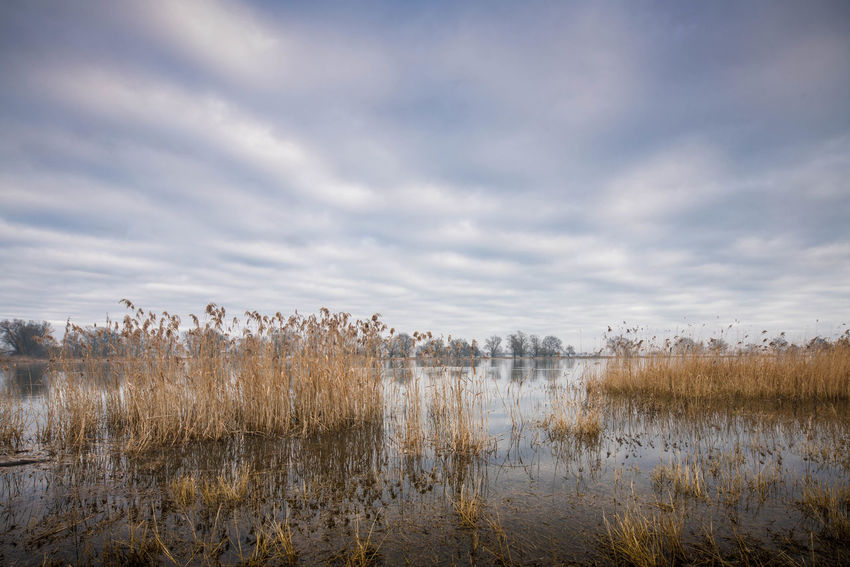 An der Oder Beauty In Nature Cloud - Sky Day Grass Landscape Nature No People Outdoors Plant Sky Water