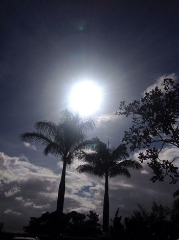 Nature Sunlight Beauty In Nature Tree Palm Tree Sky Nature Sun Day No People Sunshine Cloud - Sky