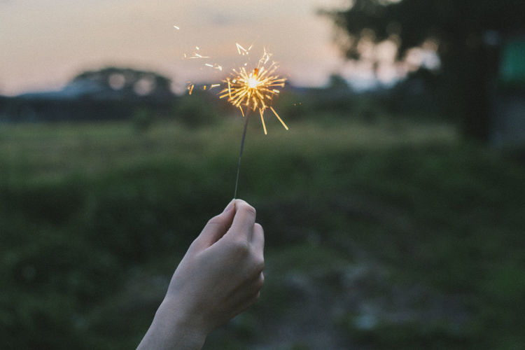 Zimne ognie Zimne Ognie Human Hand Hand One Person Holding Human Body Part Flower Flowering Plant Focus On Foreground Fragility Plant Dandelion Real People Vulnerability  Leisure Activity Lifestyles Body Part Freshness Nature Human Finger Finger Outdoors Dandelion Seed Flower Head Sparkler
