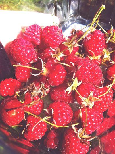 Rasberries Newcastle