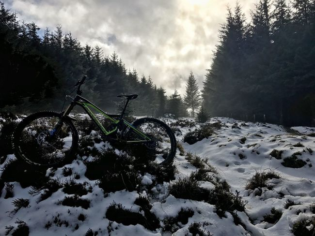 Snow day! Winter Snow Cold Temperature Nature Weather Tree Beauty In Nature Tranquility Sky Scenics Tranquil Scene Mtblife Sport No People Riding Cycling Bicycle Mondraker Scenery Enduromtb MTB ADVENTURE Outdoors Forest Landscape Day