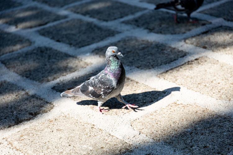 Bird Ground