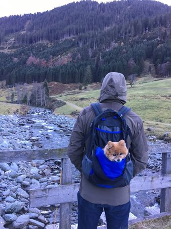 Backpack Dog Rear View Dogslife One Person Nature Hiking Lifestyles Dogtransportation Doggybag Dog Walking One Animal Standing Casual Clothing Day Outdoors Mountain Wanderlust Kitzbüheler Alpen Hiking Bagpacker Bagpack Austria Tirol  Dogtravel