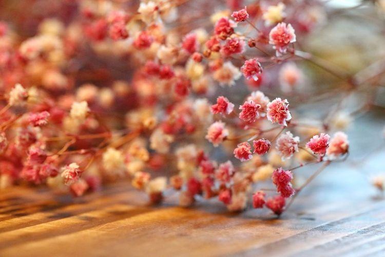 강제로 아름다움을 유지 하는것에 대한 생각.. 예쁘다.. . . #하루한컷 #프리저브드플라워 #프리저브드안개 #플라워스튜디오차차 #5DMARK4 #백마엘 #EF100MMF28LMACROISUSM Flower Flower Head Winter Snowflake Red Pink Color Close-up