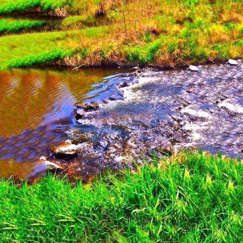 Green Green Color River Creek Water Hiking Nature Photography Art Followme Follow4follow First Eyeem Photo