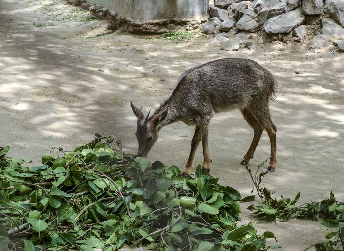 Deer standing in a water