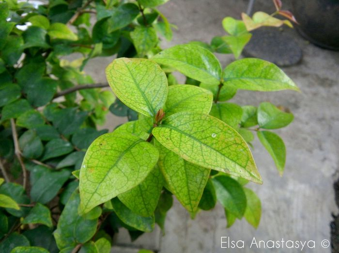 Green Morninglive Green Leaves Photography Taking Pictures