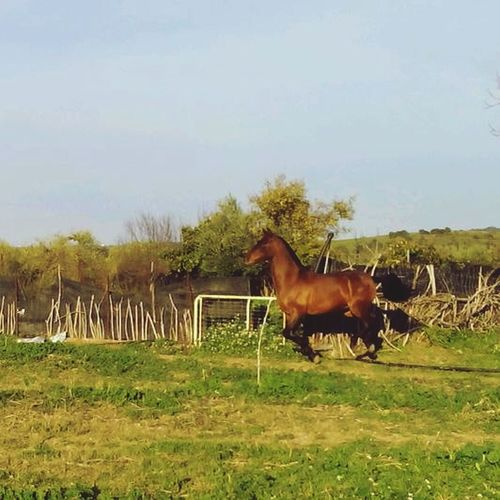 Caballos Horses Beautiful Animals