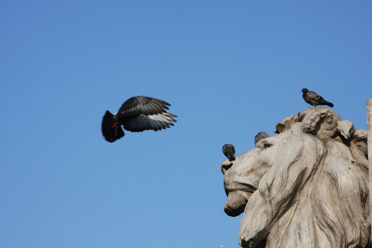 Animals Bird Blue Bluesky City Clear Sky Day Flying Monuments No People Sculpture Statue Statue