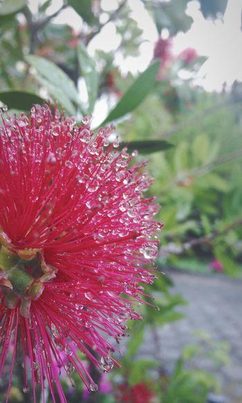 Morning dew. Water Drops Morning Dew Flower Dew Drops Dew Morning Macro Macro_collection Macro Photography Weird Flower
