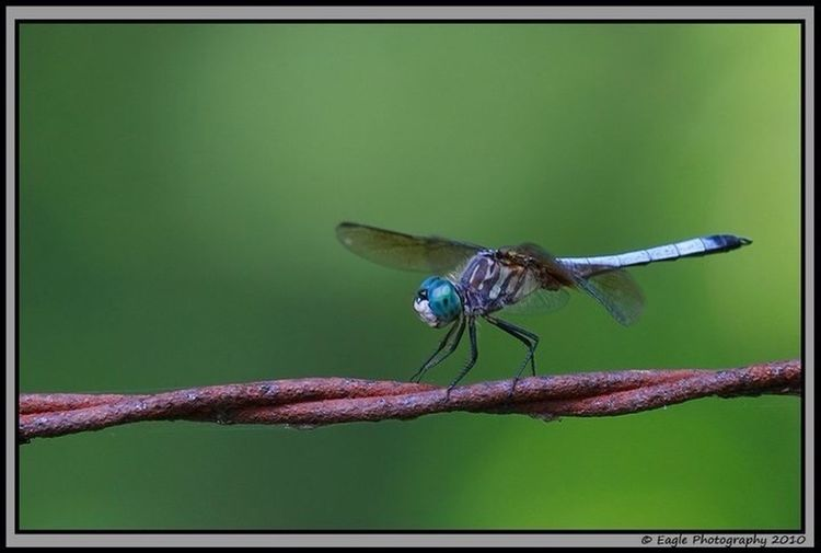 Outdoors Dragonfly Nature_collection Eye4photography