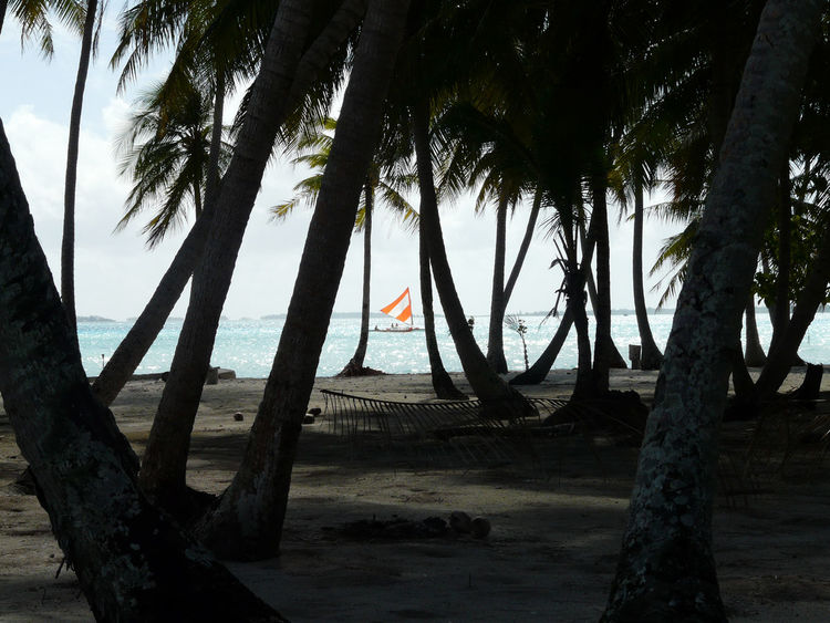 Beach Beauty In Nature Day Horizon Over Water Nature No People Outdoors Palm Tree Sand Scenics Sea Shore Sky Tranquil Scene Tranquility Tree Tree Trunk Water Lost In The Landscape
