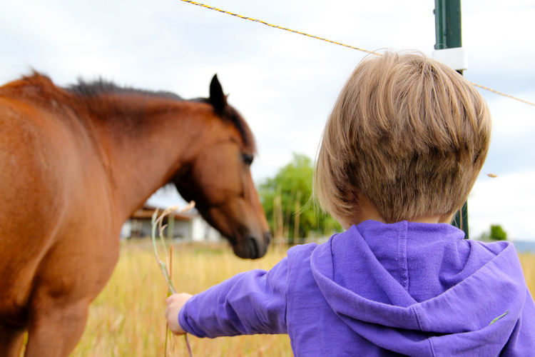 Animal Themes Animals Child Domestic Animals Equestrian Equestrian Life Feeding  Feeding Animals Focus On Foreground Girl Horse Horses Leisure Activity Lifestyles Livestock Mammal Men One Animal Person Pets Rear View Side View Sky Togetherness Working Animal