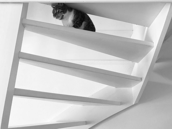 Architecture Interior Pets Domestic Domestic Animals One Animal Mammal Cat Indoors  Animal No People Staircase Steps And Staircases